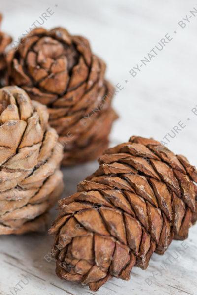Шишка кедровая с орешками
